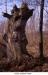 4Viel-arbre-mort